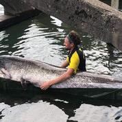 Val-de-Marne : un homme pêche un poisson de 2,4 mètres dans la Seine
