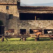 Sept tables provençales et gourmandes entre Ménerbes et Aix-en-Provence