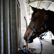 L'inquiétante multiplication de mystérieux actes de barbarie envers les chevaux