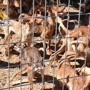 Espagne: 41 chiens affamés sauvés dans une ferme