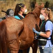 «Je n'en dors plus la nuit» : face aux chevaux mutilés, les éleveurs se mobilisent