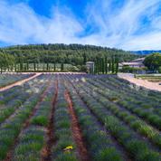 Œnotourisme : les plus beaux vignobles à sillonner autour d'Aix-en-Provence