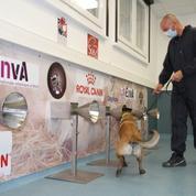 Covid-19: l'Académie de Médecine encourage à développer le dépistage à l'aide des chiens renifleurs