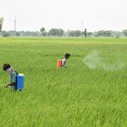 Pesticides interdits dans l'UE : des entreprises européennes exportent 41 de ces produits, dénoncent deux ONG