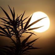 Gérald Darmanin qualifie à nouveau le cannabis de «merde»