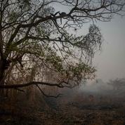 Brésil : stupeur et désolation dans un Pantanal dévoré par les flammes