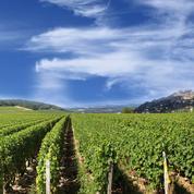 Une association dénonce des résidus de pesticides dans des vins certifiés HVE