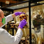 Un musée de l'Université d'Oxford retire des restes humains de ses collections