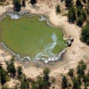 Des centaines d'éléphants tués par une bactérie, au Botswana