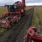 Néonicotinoïdes : la filière betterave présente un plan de transition au ministre de l'Agriculture