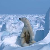 L'Onu et Londres convoquent un sommet climat le 12 décembre