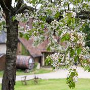 Calvados, pommeau, poiré... «Spiritour» dans le verger normand