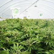 Cannabis : un rapport prône une «légalisation raisonnée» pour «assécher» les trafics