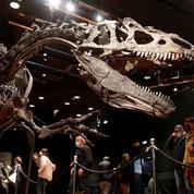 Le squelette d'un «grand-père» du Tyrannosaurus Rex vendu plus de 3 millions d'euros à Paris