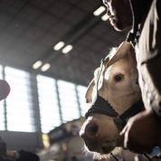 Annulation du salon de l'agriculture : des événements alternatifs auront lieu, promet la FNSEA