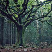 Halloween : Brocéliande, Gévaudan... cinq lieux mystérieux où frémir