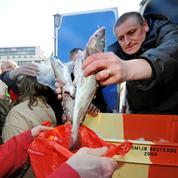 Pêche: quotas restreints pour le cabillaud en mer Baltique en 2021