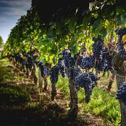 Covid-19 : les députés votent une réduction des charges pour les viticulteurs