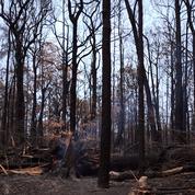 Australie : les catastrophes seront plus «graves et fréquentes», selon la commission des feux