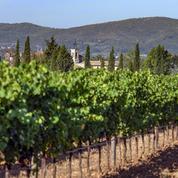 Œnotourisme : dans les Alpes-de-Haute-Provence, à la découverte d'un vignoble confidentiel