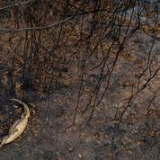 Brésil : les incendies continuent à ravager l'Amazonie et le Pantanal