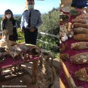 Des objets archéologiques «rarissimes» issus d'une épave du XVIème siècle saisis en Corse