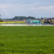 Glyphosate : 7 millions d'euros vont être débloqués pour accélérer la recherche sur les alternatives