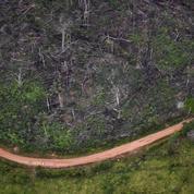 Brésil : la déforestation repart à la hausse en Amazonie