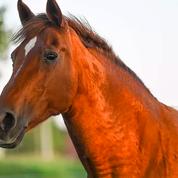 Un cheval atrocement mutilé dans l'Hérault, une enquête ouverte