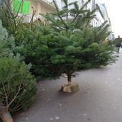 Les ventes de sapins de Noël sont autorisées dès ce vendredi 20 novembre
