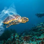 Sacs, fils de pêche, emballages : le catalogue des plastiques qui étouffent les animaux marins
