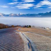 Faute de ski, cinq vins de Savoie à découvrir dans les stations des Alpes cet hiver