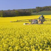 Dijon : trois militants anti-OGM mis en examen pour destruction de colza