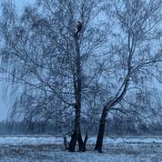 Sibérie: un étudiant russe grimpe sur un bouleau dans la forêt pour étudier «en ligne»