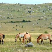 Deux-Sèvres : découverte d'un cheval mort et mutilé
