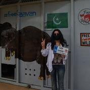 Un éléphant maltraité au Pakistan a été transféré au Cambodge et accueilli par Cher
