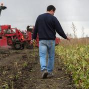 Jaunisse de la betterave : une récolte 2020 «catastrophique»