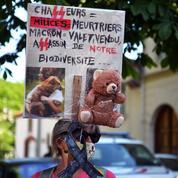 Bruxelles demande à la France de mieux protéger l'ours brun