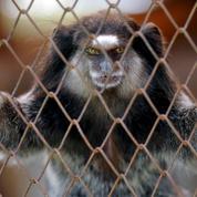 Brésil : démantèlement d'un réseau de trafic d'animaux sauvages