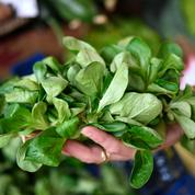 Salmonelle : plusieurs lots de salade en sachet rappelés