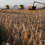 Chicago : le blé plombé par une taxe russe sur ses exportations