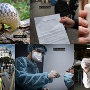 Écouvillon, hydroxychloroquine, pangolin... L'année 2020 a mis des mots sur les maux