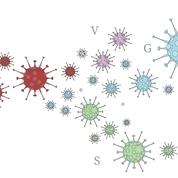 Histoire d'un mutant : comment le coronavirus a évolué