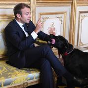 Nemo, le chien des Macron, se met en scène contre les abandons d'animaux