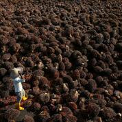 Le deuxième producteur malaisien d'huile de palme interdit aux États-Unis