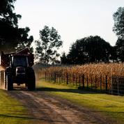 Le maïs en progression, soutenu par des restrictions argentines à l'exportation