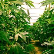 Doubs : la gendarmerie saisit 389 plants de cannabis chez un particulier