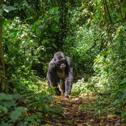 RDC : au moins six rangers tués dans une attaque dans le parc des Virunga