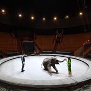Gard : une éléphante cachée par un cirque retrouvée dans une décharge