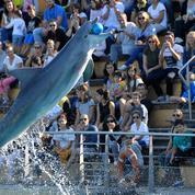 Le parc Astérix ferme son delphinarium: «Nous sommes un parc d'attractions, pas un parc animalier»